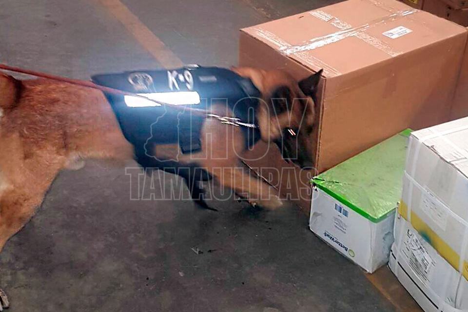 Unidad Canina localiza droga en paquetería de Guadalajara