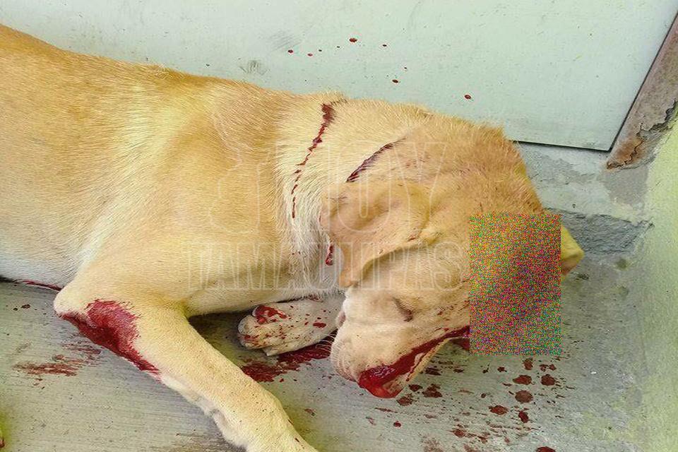Investigan crueldad animal a perrito el 'Güerejo' en Reynosa