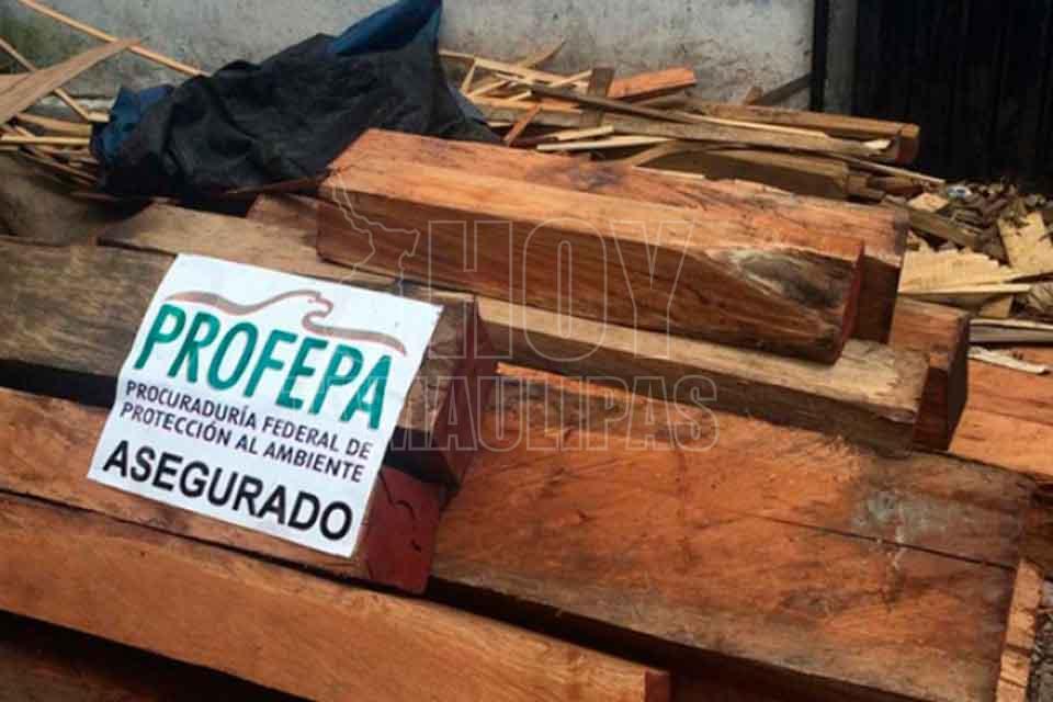 León cachorro y loro son rescatados de maltrato en Nuevo León