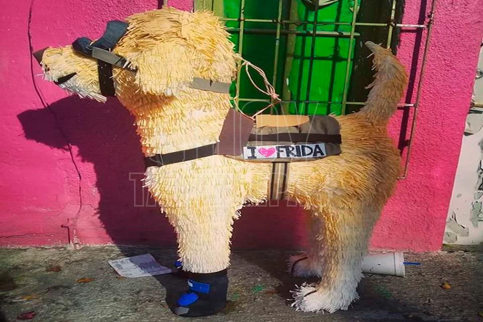 http://hoytamaulipas.net/lafoto/57039/Realizan-en-Reynosa-piniata-de-Frida-la-perra-rescatista-de-los-sismos.jpg