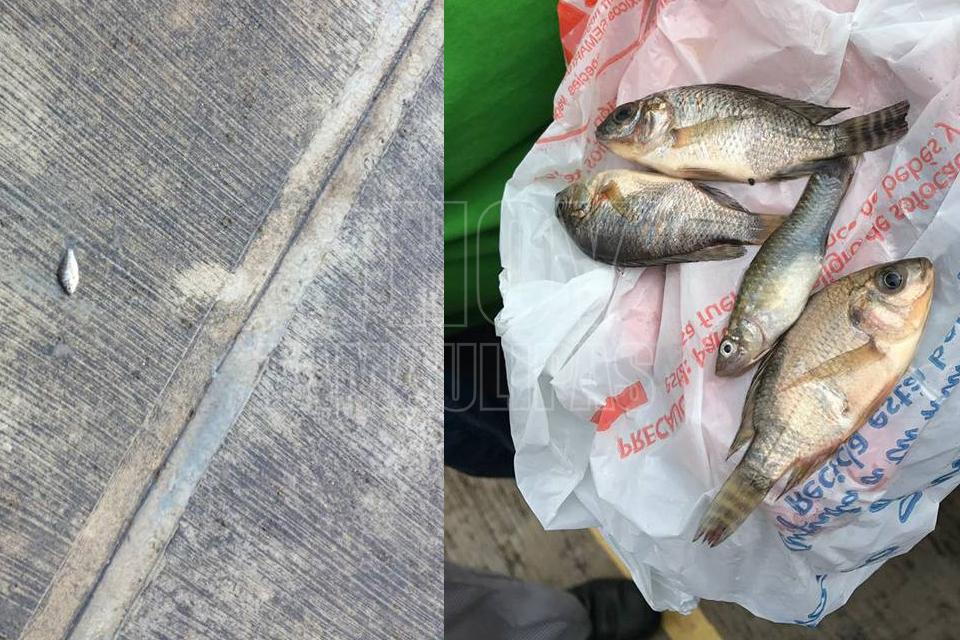Una extraña lluvia de peces sorprendió al sur del país — México